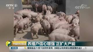 [中国财经报道]养殖户信心增强 正扩大产能| CCTV财经