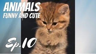 Super Cute Animals / Funny and Cute Ep.10 Animal Videos Compilation 2018 / Animales Graciosos Videos