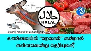 உண்மையில் 'ஹலால்' என்றால் என்னவென்று தெரியுமா? - Tamil TV