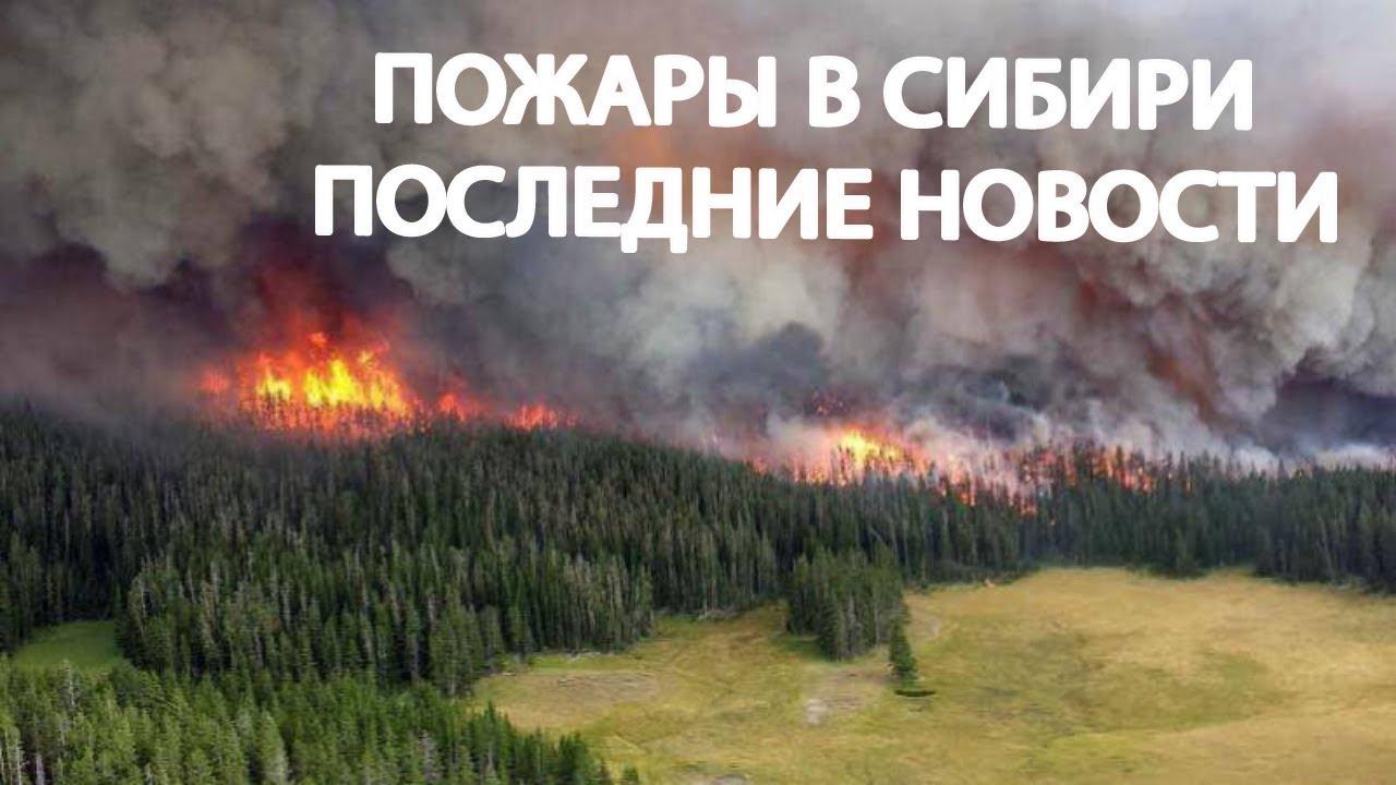 Пожары в Сибири последние новости