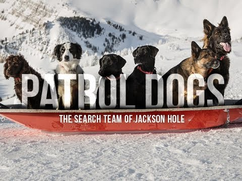 Patrol Dogs- The Search Team of Jackson Hole