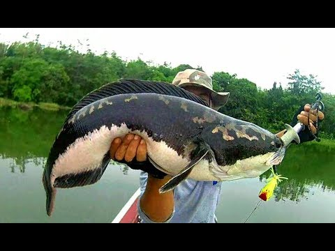MANCING strike MONSTER GEMUK