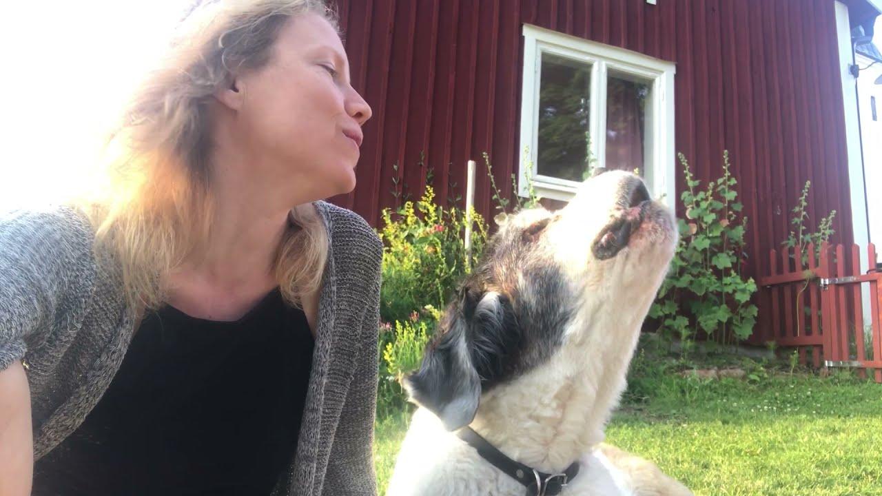 Kulning, one last duet ❤️