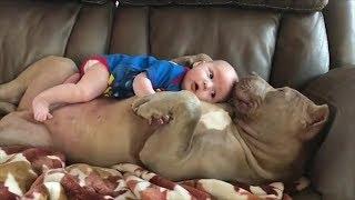 「最高におもしろ犬」 おもしろ犬 - 可愛い犬 - 犬動画 HD 2017 #08 htt...