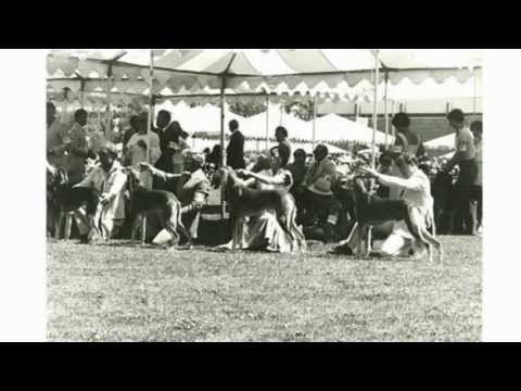 """American Saluki Assn. """"A Shared History"""" Preview Clip!"""