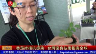 番茄嫁接抗感染 台灣優良技術推廣全球-今日大話新聞