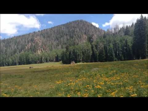 Pine Valley Mountains Utah - Hiking Signal Peak, Hidden Forest, and Whipple Valley