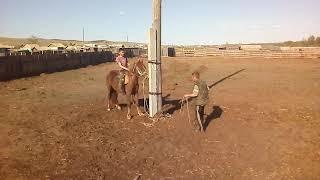 Обучение лошадей в Бурятии