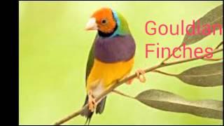 Top 15 Best of Finches Birds