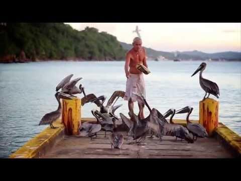 Harry The Pelican Whisperer