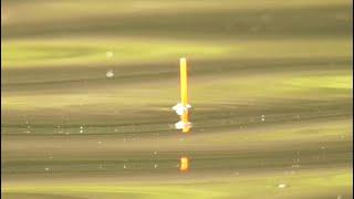 КАРАСИ И КАРПЫ ГНУТ УДОЧКУ И РВУТ ПОВОДКИ ПОКЛЁВКИ КРУПНЫМ ПЛАНОМ Рыбалка на поплавок в июне 2021
