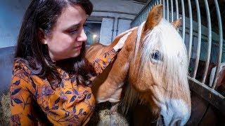 Sorge um meine Pferde ✮ SILVESTER IM STALL ♥