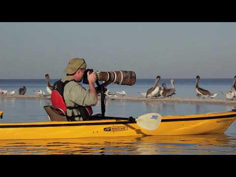 The Best Wildlife Photography TV Show Is Free on YouTube