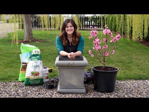 Planting a Miniature Peach Tree! 🍑🧡// Garden Answer