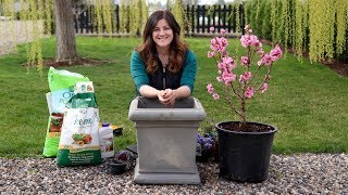Planting a Miniature Peach Tree! 🍑🧡// Garden Answer