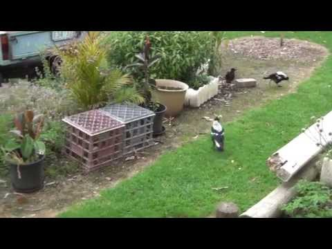 Feeding Many Birds Part 2