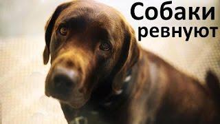 Ревнивые Собаки  - Прерывая Поцелуи.  Сборник!