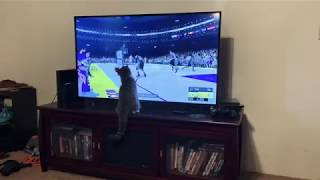Funny Cat Watching PS4 | NBA 2k19