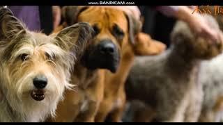 Смотреть всем!Грустные видео о животных