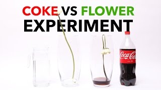 What does Coca Cola to a flower?