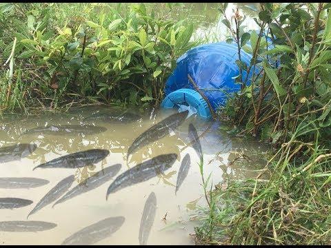 Amazing Method For Fishing 2019 Using Big Plastic of Bottle New Technology 2019