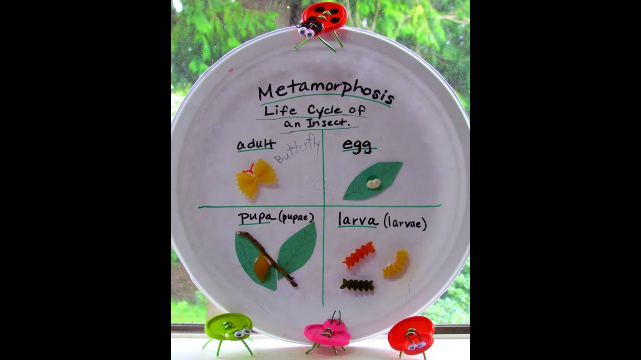 Paper plate craft metamorphosis youtube paper plate craft metamorphosis jeuxipadfo Images