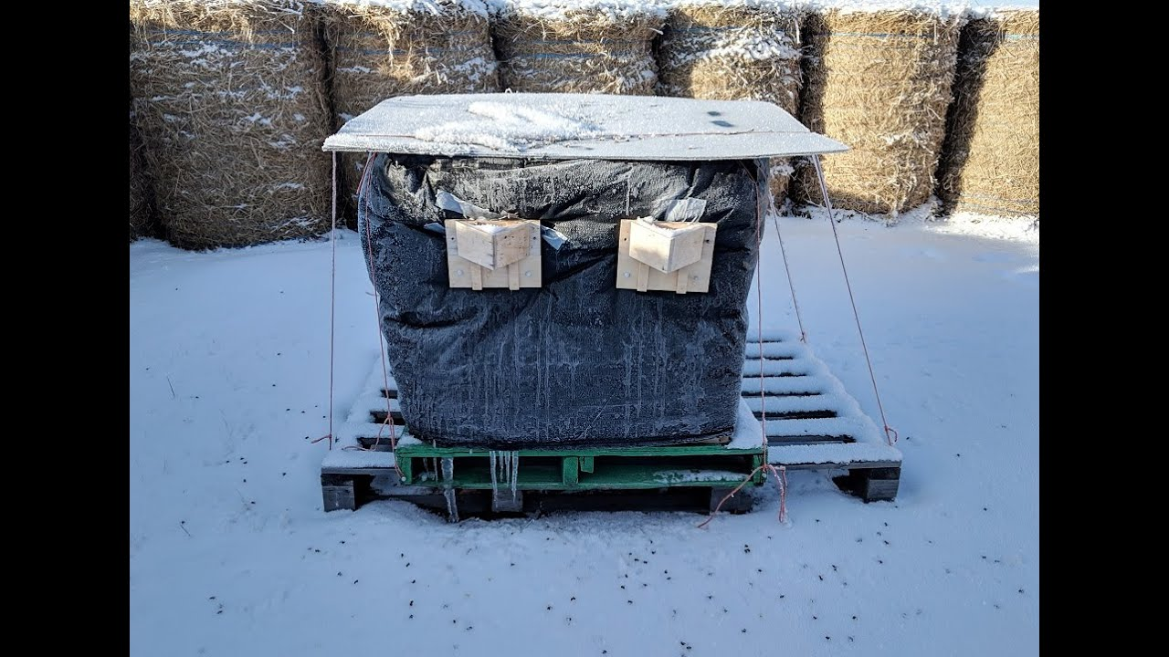 Wrapping Honeybees for a Saskatchewan Winter