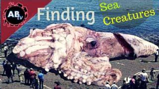 Finding Sea Creatures! Corey Wild - Ep. 9 : AnimalBytesTV