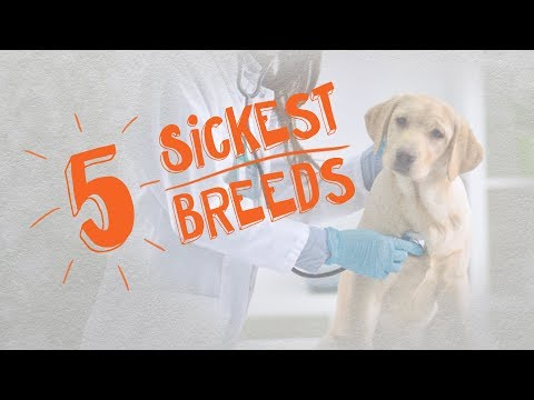 The 5 Sickest Dog Breeds of 2018 -- Cone of Shame with Dr. Andy Roark