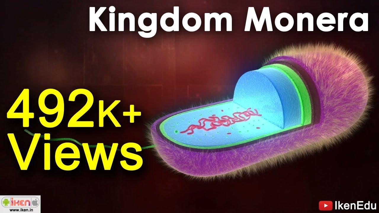 Kingdom Monera Youtube