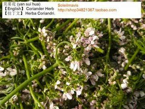 Maintain your healthy with China Medicinal Herbs