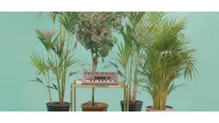 CHAI KHAT - Hail Satin (Official Music Video)