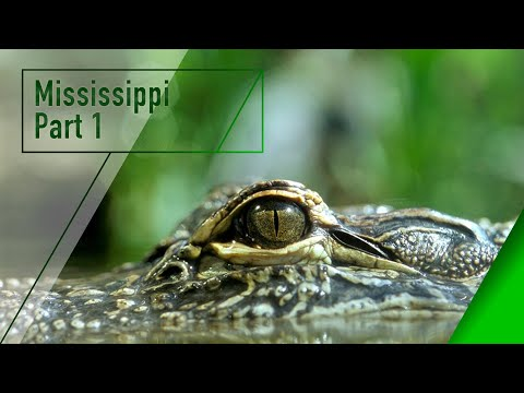 Ol Man River - Mighty Mississippi Part 1 - The Secrets of Nature