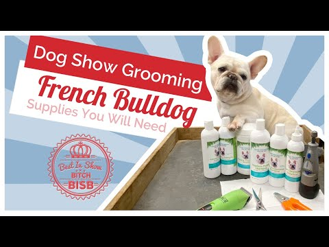 Dog Show Grooming: How To Groom A French Bulldog And The Supplies You Need
