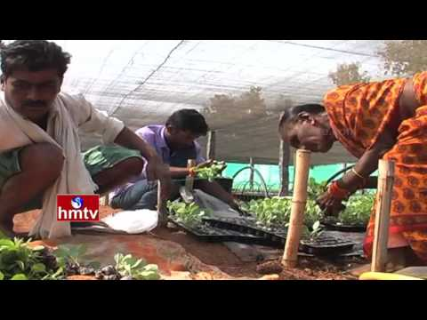 Importance of Nursery Raising In Vegetable Production | Nela Talli | HMTV