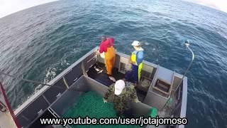 Fishing video,pesca de palangre de fundo Açores / Longline fishing in  Azores islands.فيديو الصيد