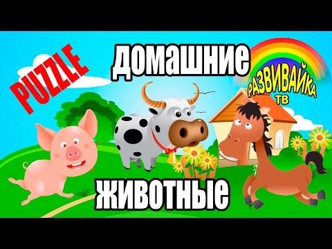 пазлы онлайн бесплатно животные