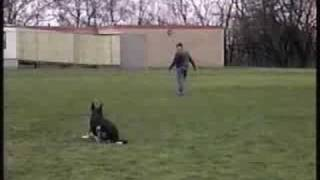 Pittsburghk9 German Shepherd Duke's Obedience Training