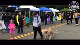 Incredible Off Leash Heel | Pit Bull Dog Training | Dog Board and Train Northern Virginia