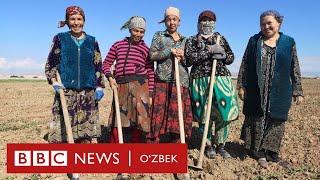Ўзбекистон: Бир сурат нега муҳокамаларга сабаб бўлди? - BBC Uzbek