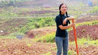 【南方小蓉】大山姑娘邊幹活邊唱歌,純樸聲音真好聽Country girls do farm work and sing in a simple and pleasant voice