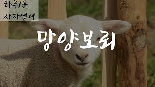 [하루1분, 망양보뢰(亡羊補牢)] 사자성어 짧고 좋은 …