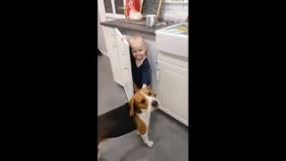 Toddler Playing Hide And Seek With Dog