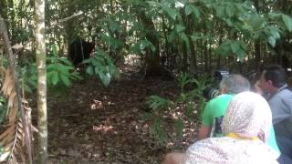 Visitors enjoy Wild Cassowary - Daintree Rainforest