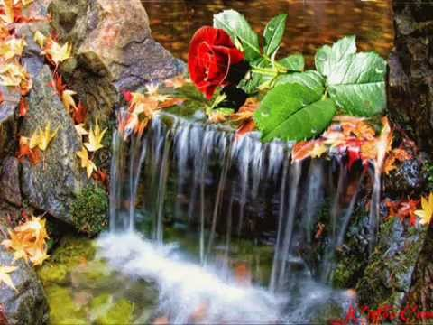 MICHEL PÉPÉ-----The Wonderful Nature - YouTube