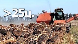 """РЕКОРД!!! Подсолнух """"Анастасия"""" от компании Сады Украины.  #СельхозТехника ТВ"""