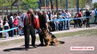 Видео Новости-N: Выставка собак в Николаеве