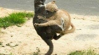 Бой котов. Драка котов. Коты дерутся
