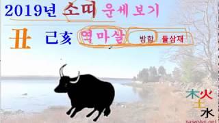 2019년 소띠   2019년 기해년 소띠 띠별 월별 사주 운세
