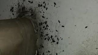 Тараканьи бега по Гальянке. Жуть!